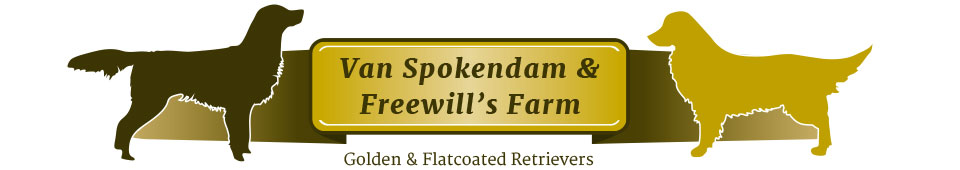 Van Spokendam & Freewill's Farm – Golden & Flatcoated retrievers
